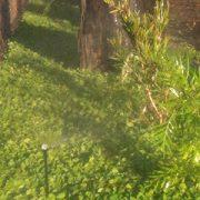 Dichondra Plant Tiles